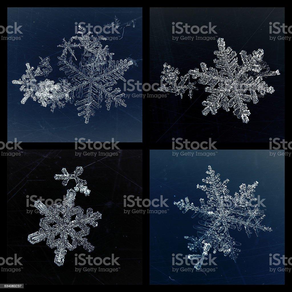 Satz von vier Schneeflocken – Foto