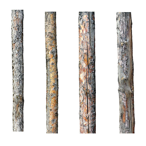 set of four timber isolated on white background set of four timber isolated on white background log stock pictures, royalty-free photos & images