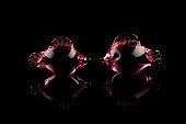 Set of glass fishes isolated on a black background
