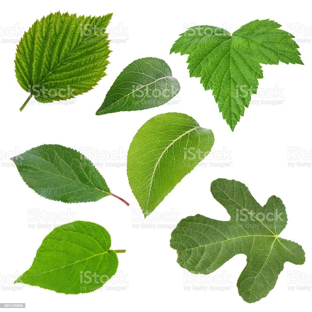 Ensemble de vert feuilles isolé sur blanc - Photo