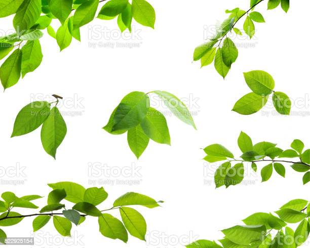 Photo of Set of green tree leaves and branches