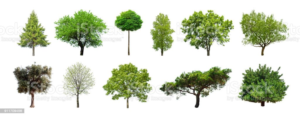 Set of green trees isolated on white background stock photo
