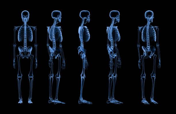 set of human skeleton x-ray stock photo