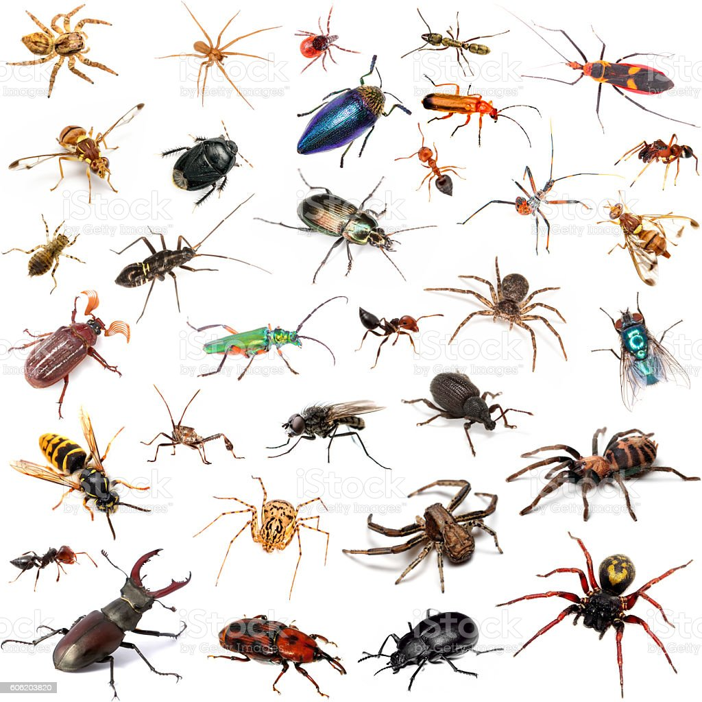 Set of insects on white background stock photo