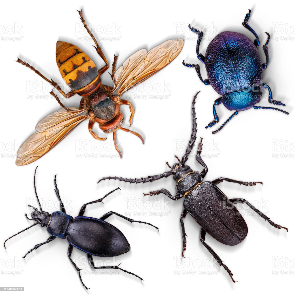 Set of insects on white stock photo