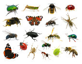 istock Set of insects 177793593