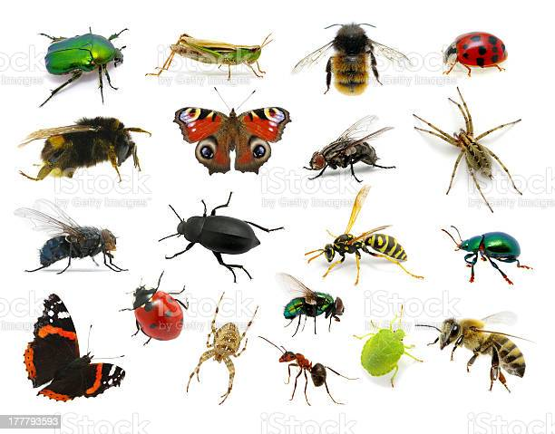 Set of insects picture id177793593?b=1&k=6&m=177793593&s=612x612&h=guvetxxwiswoqt2bes0iwmn5xry owrdtwgjbnk61rq=
