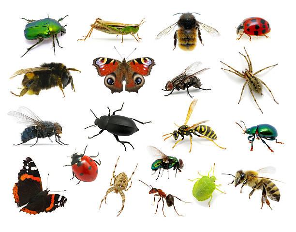 Set of insects picture id177793593?b=1&k=6&m=177793593&s=612x612&w=0&h=hu3cc szqfshz5rpssprww87cni9c3vwt8qs3mgmgwm=