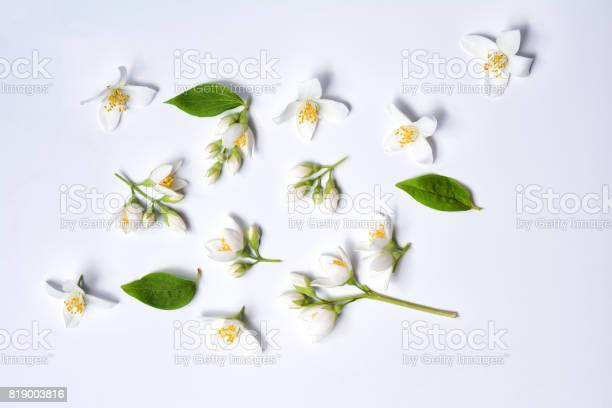 Set of jasmine flowers on white background picture id819003816?b=1&k=6&m=819003816&s=612x612&h=yp 4pg49inc3wztxyer ctsrdenwrs6ahd5poiqtgiu=