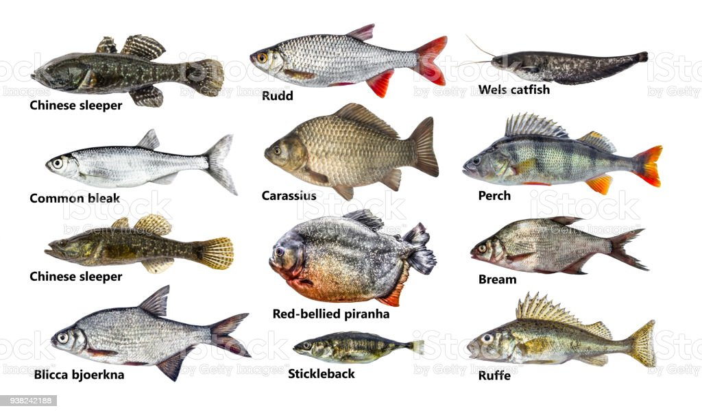 Fisch Sorten Liste