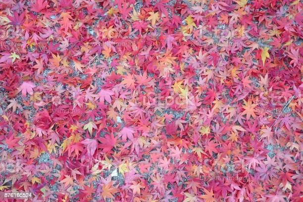 Photo of Set of maple leaves on the ground