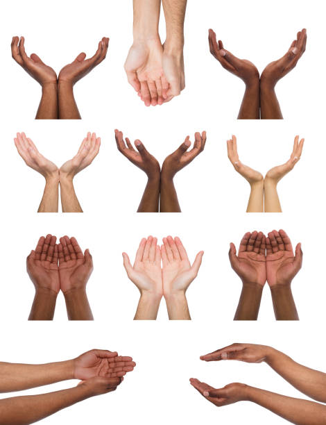 Set of multiethnic hands holding or offering something Black and white hands holding or offering something, isolated on white background. Open palms of multiethnic men, handful gesture. Set of hands. hands cupped stock pictures, royalty-free photos & images