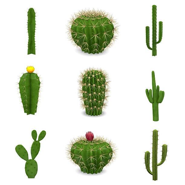 A set of nine cacti isolated on a white background stock photo