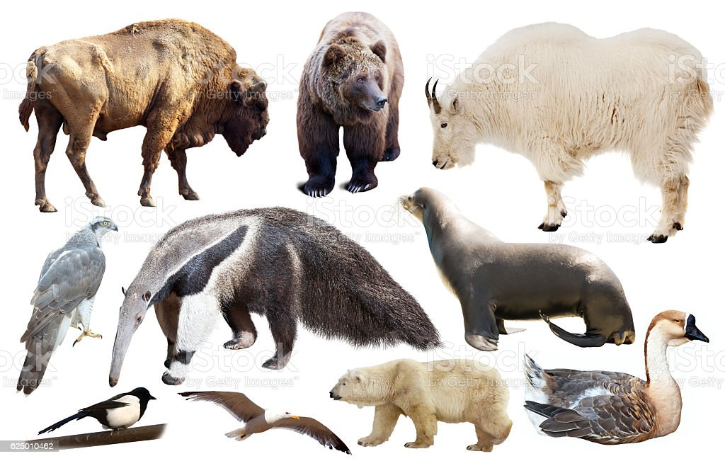 set of north american animals isolated stock photo