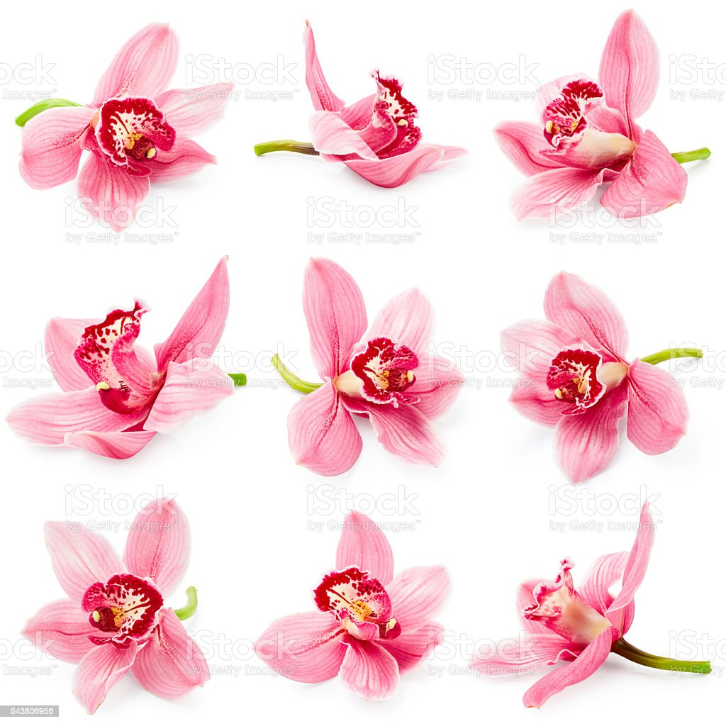 Set of orchid flower stock photo