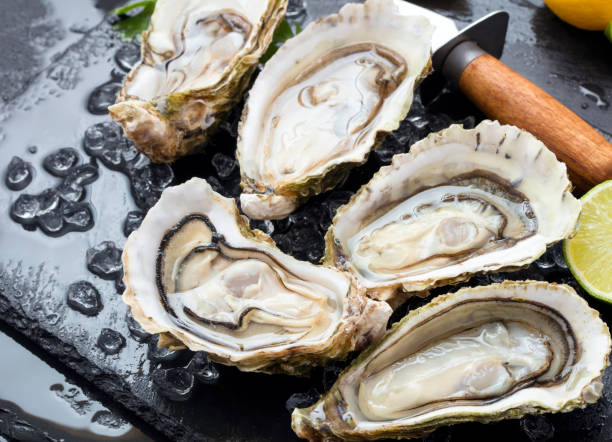 set of oysters set of fresh opened oysters with ice, lemon and knife on black slate background mollusk stock pictures, royalty-free photos & images
