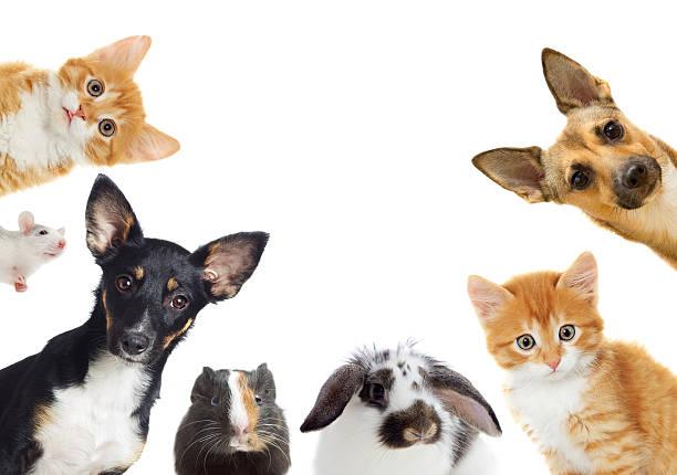 Satz von Haustier – Foto