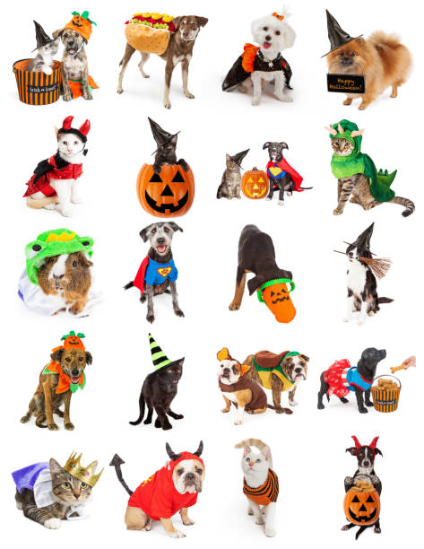 Set of Pets in Halloween Costumes Set of twenty cute and funny pet photos with Halloween costumes and props. Isolated on white. costume stock pictures, royalty-free photos & images
