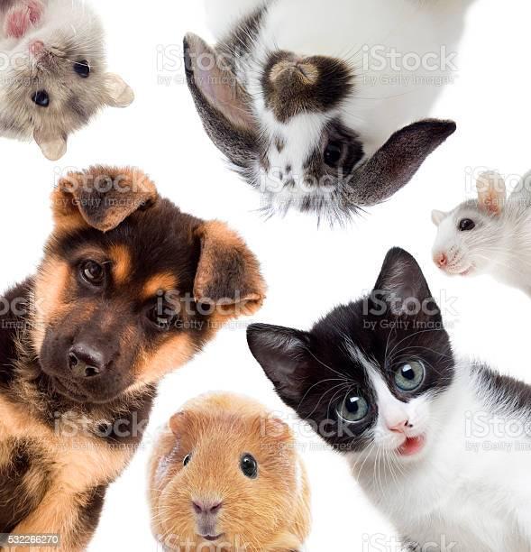 Set of pets picture id532266270?b=1&k=6&m=532266270&s=612x612&h=pvnwue xgasbkcggcpj5bfdkkxr1ihcxnjmdmdiyjd0=
