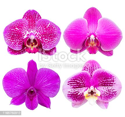 set of phalaenopsis orchid flower isolated on white with clipping path