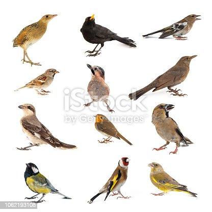 Set of photographs of birds isolated on white background.
