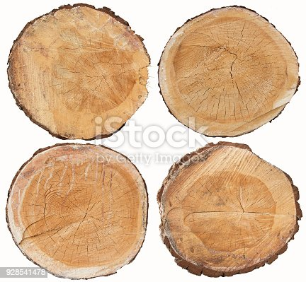 Set of pine wood cross section isolated on white