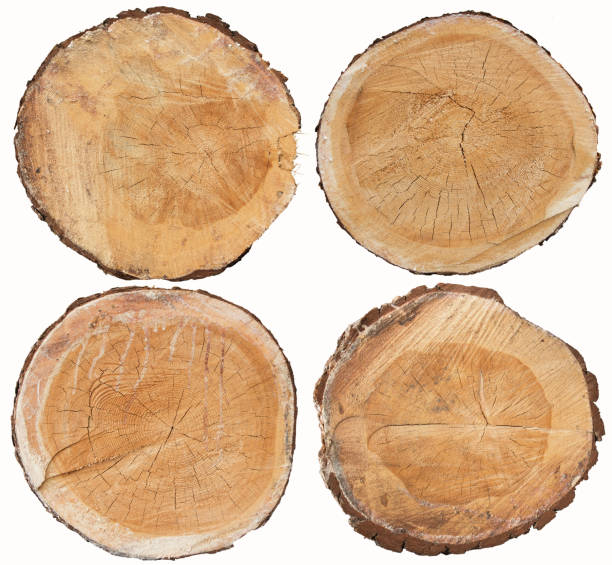 Set of pine wood cross section isolated on white stock photo