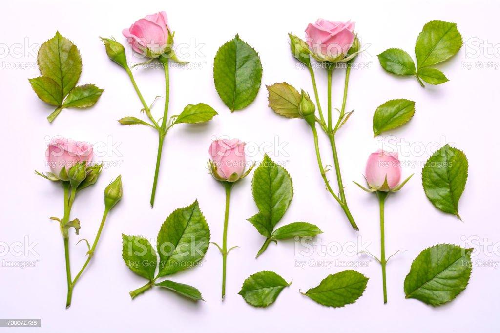 Ensemble de fleurs roses. Motif décoratif avec des roses lumineux rose sur fond blanc. - Photo