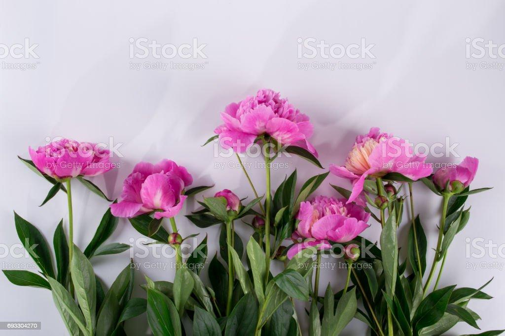 Photo Libre De Droit De Jeu De Dessin De Fleurs De Pivoines Rose