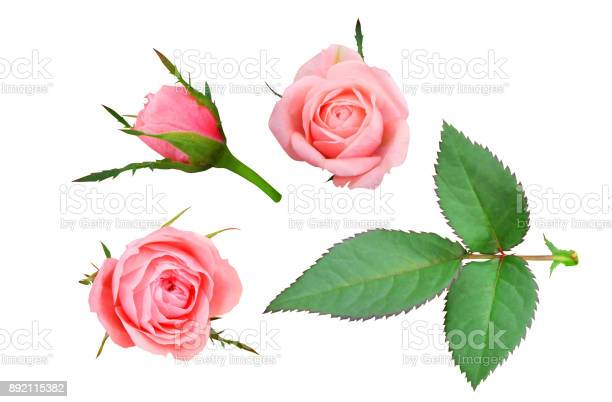 Set of pink roses picture id892115382?b=1&k=6&m=892115382&s=612x612&h=zzgzbxf59zfxpf4m7 up6wncwcmg05xcamyfsrdepno=