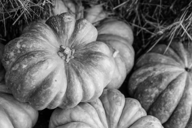 set of pumpkins lies on a hay tinted base gray design vegetable - pumpkin pie стоковые фото и изображения