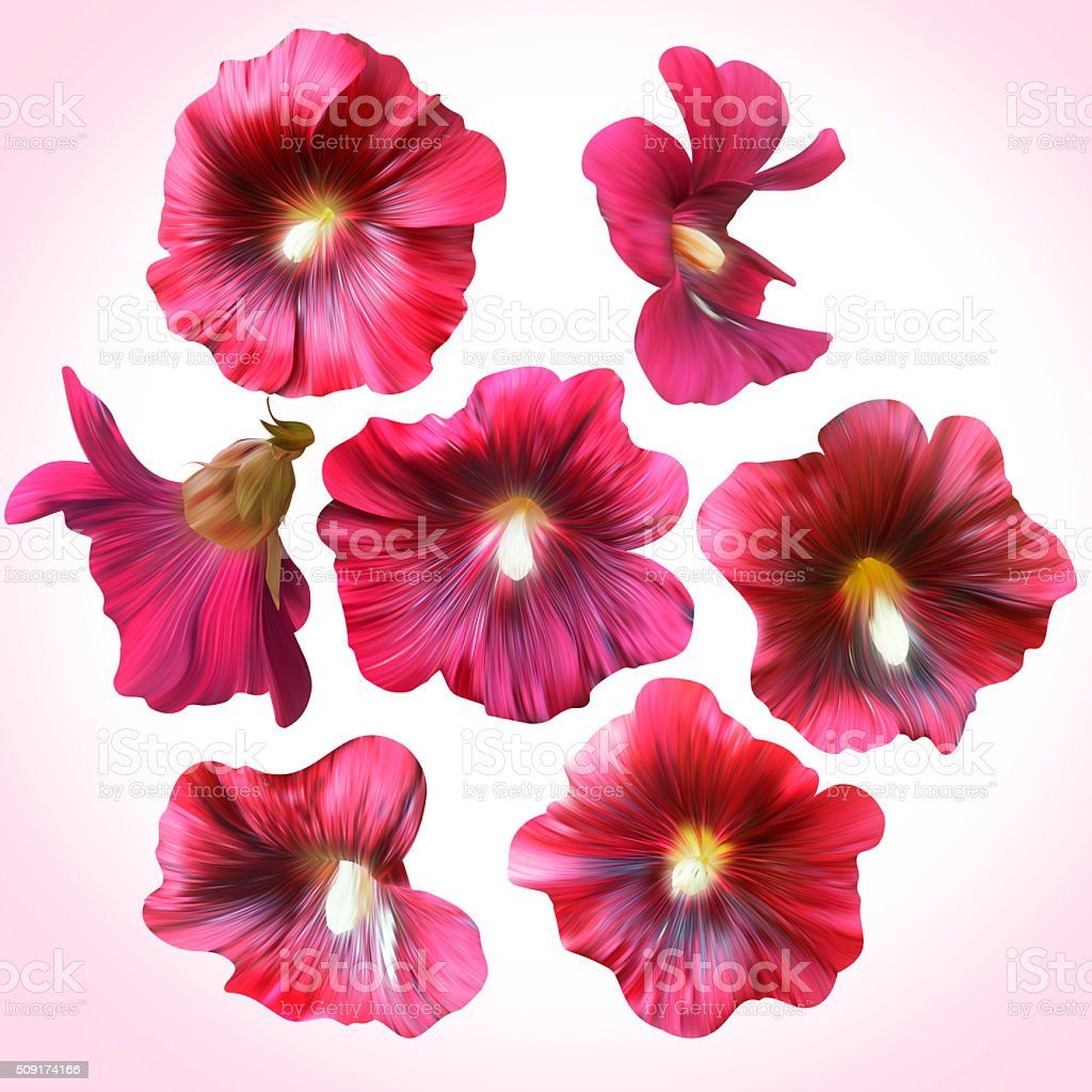Set of Purple Mallow heads for floral design. stock photo