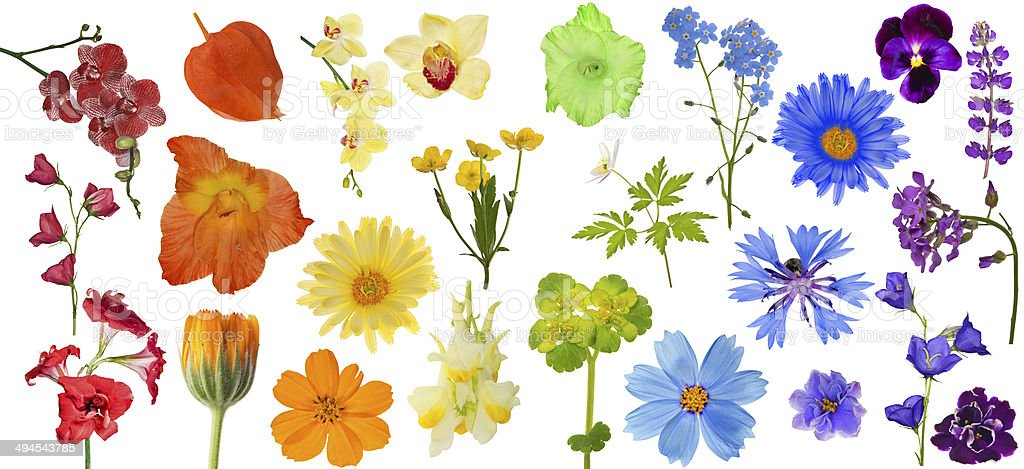 set of rainbow color flowers isolated on white stock photo