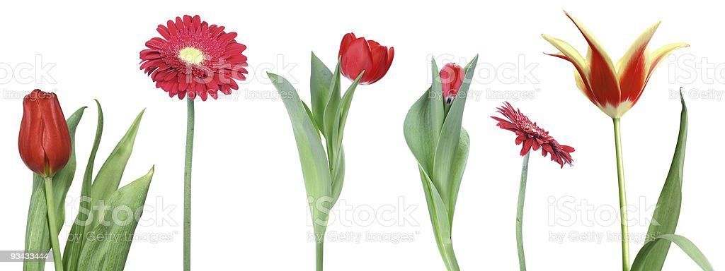 set of red flowers stock photo
