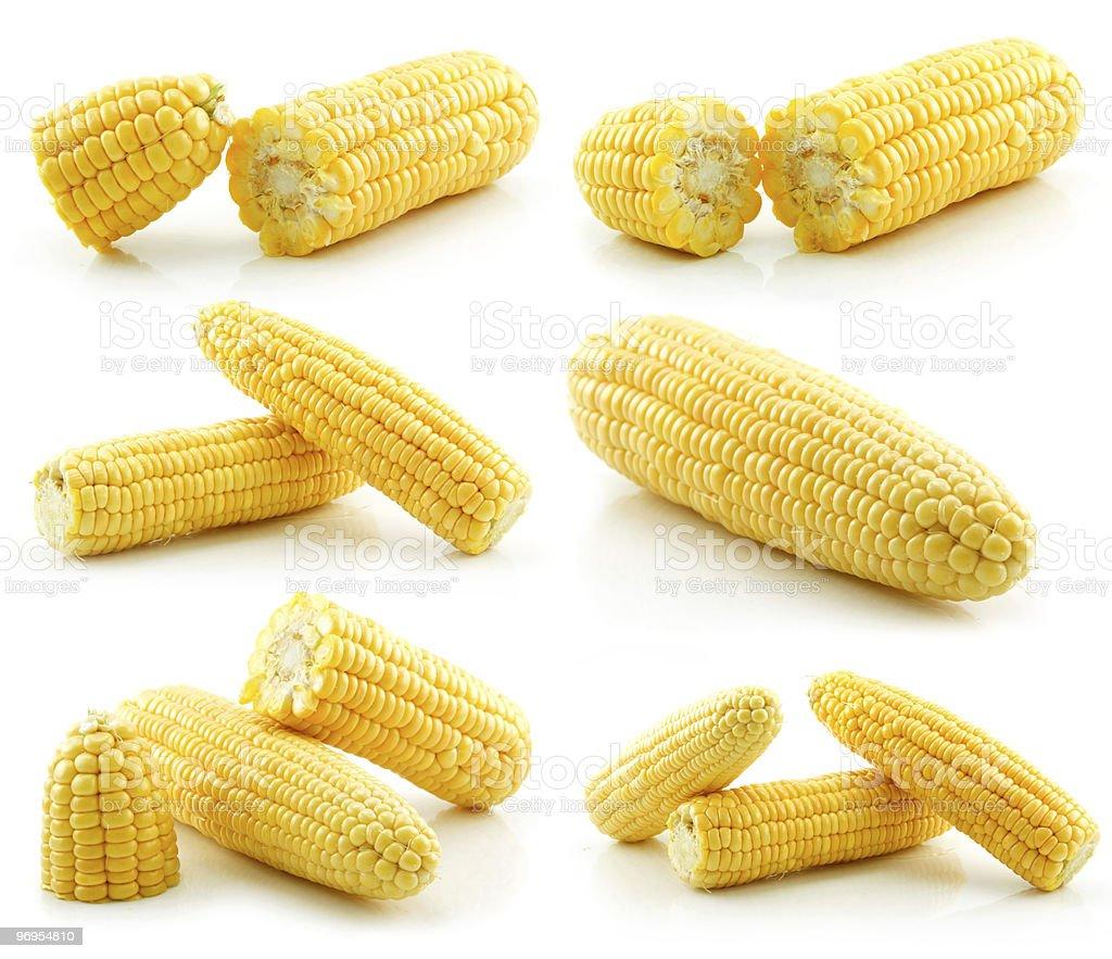 Set of Ripe Yellow Corn Isolated on White royalty-free stock photo