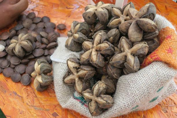 一套薩查因奇堅果在一個質樸的麻袋上, 與乾燥的薩查因奇種子的背景, 模糊。圖像檔