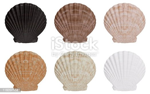istock Set of sea shell outer side isolated on white background with shadow. Sea shell front view, 3D illustration 1152071881