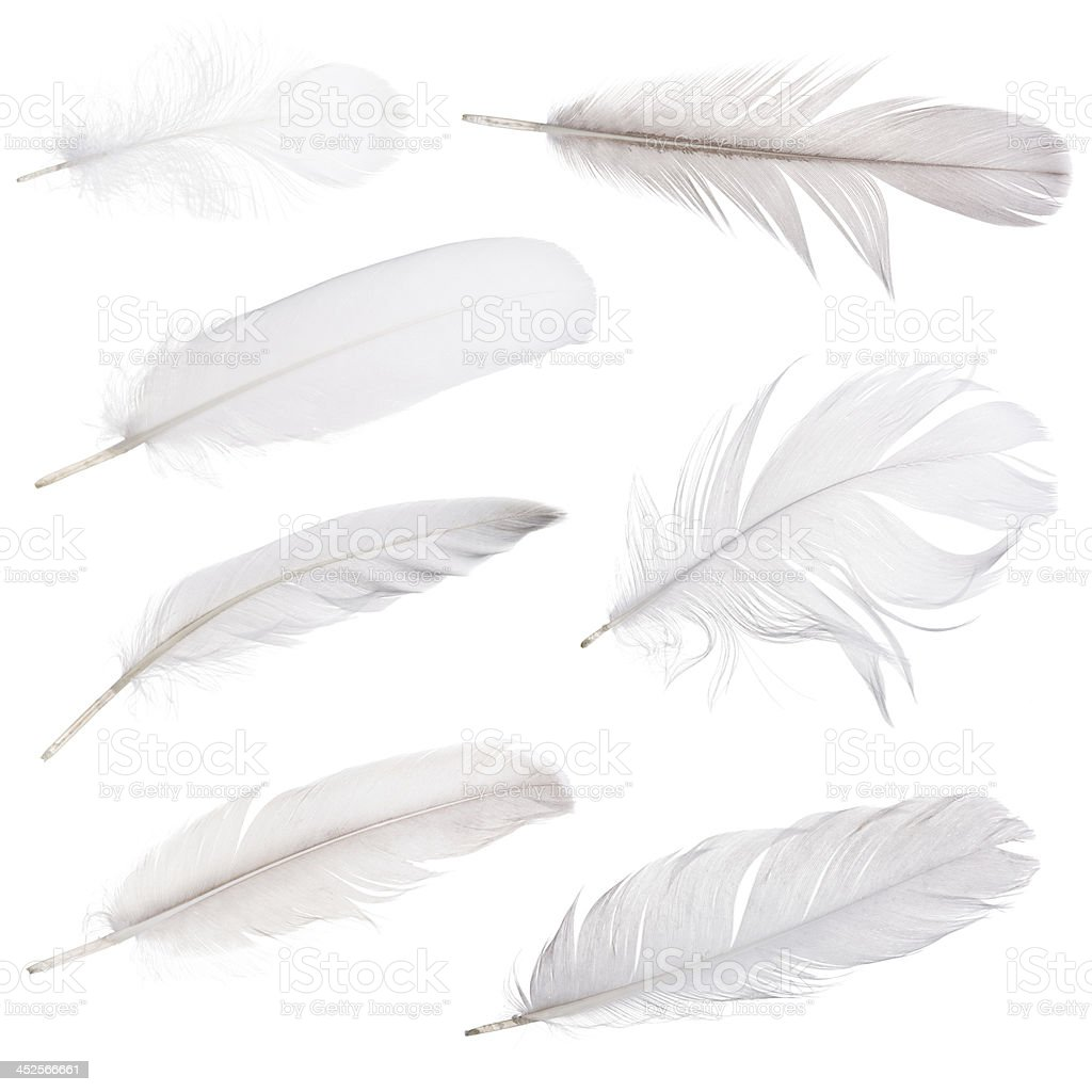 set of seven light grey feathers isolated on white stock photo