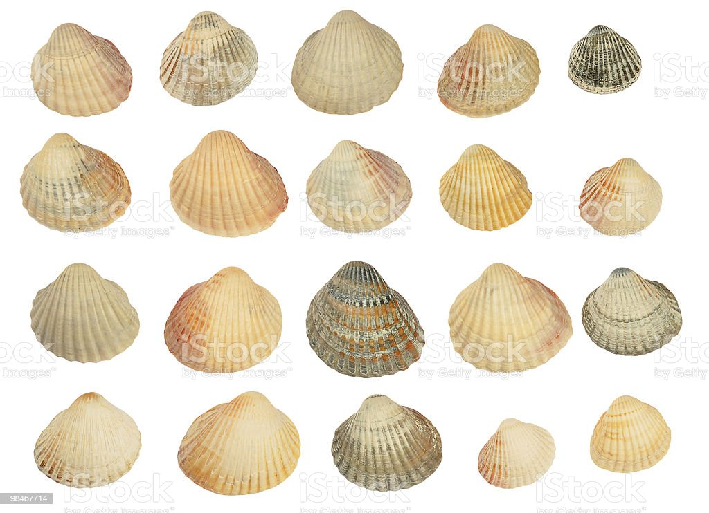Set of shells royalty-free stock photo