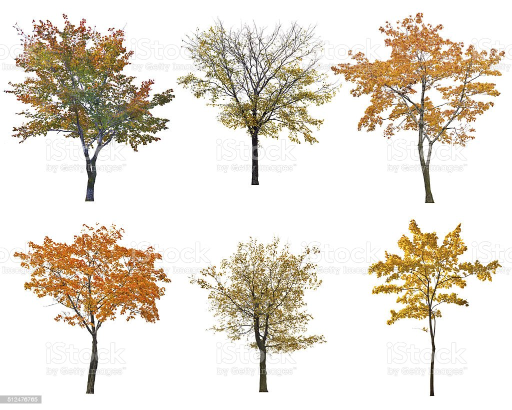 Ensemble de six automne arbres isoalted sur blanc - Photo