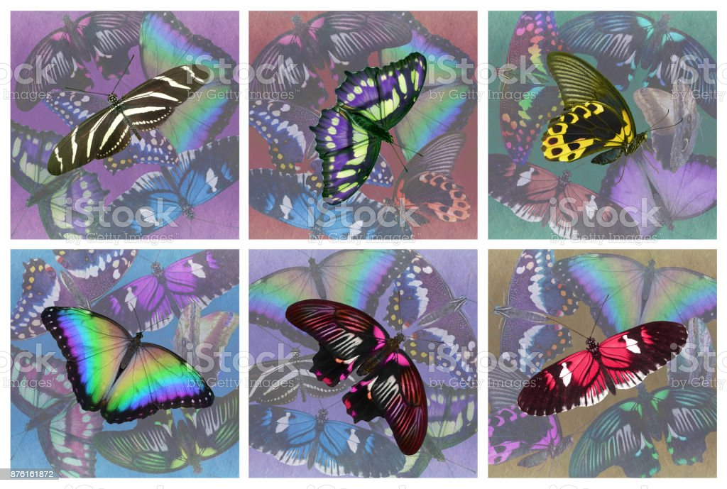 Set of six butterfly drinks coasters stock photo