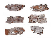 Set of six pine bark sections in high resolution