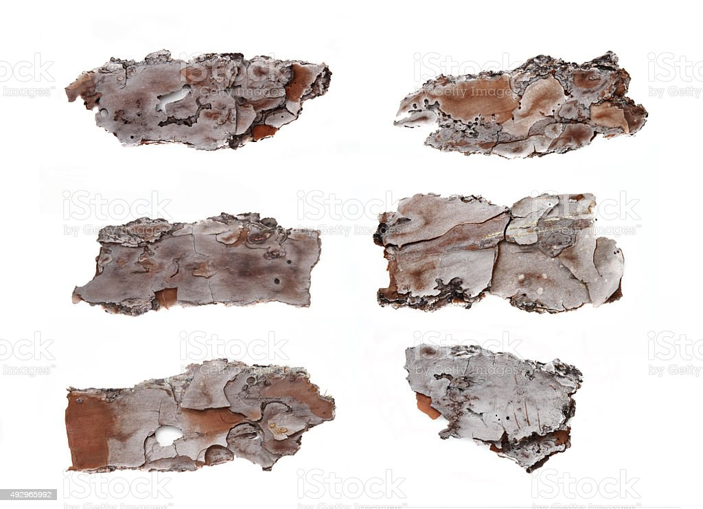 Set of six pine bark sections in high resolution stock photo