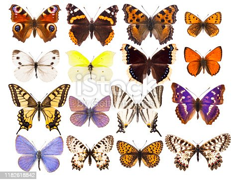 Set of sixteen various beautiful European butterflies isolated on white
