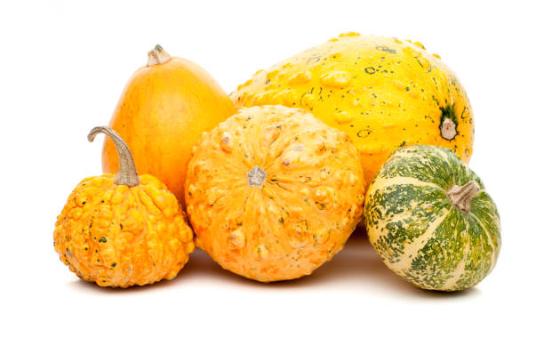 set of small pumpkins isolated on white background - gourd stock photos and pictures