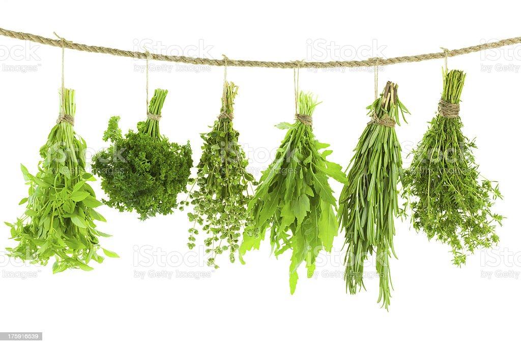Juego de hierbas, especias y secado, aislado montaje - foto de stock