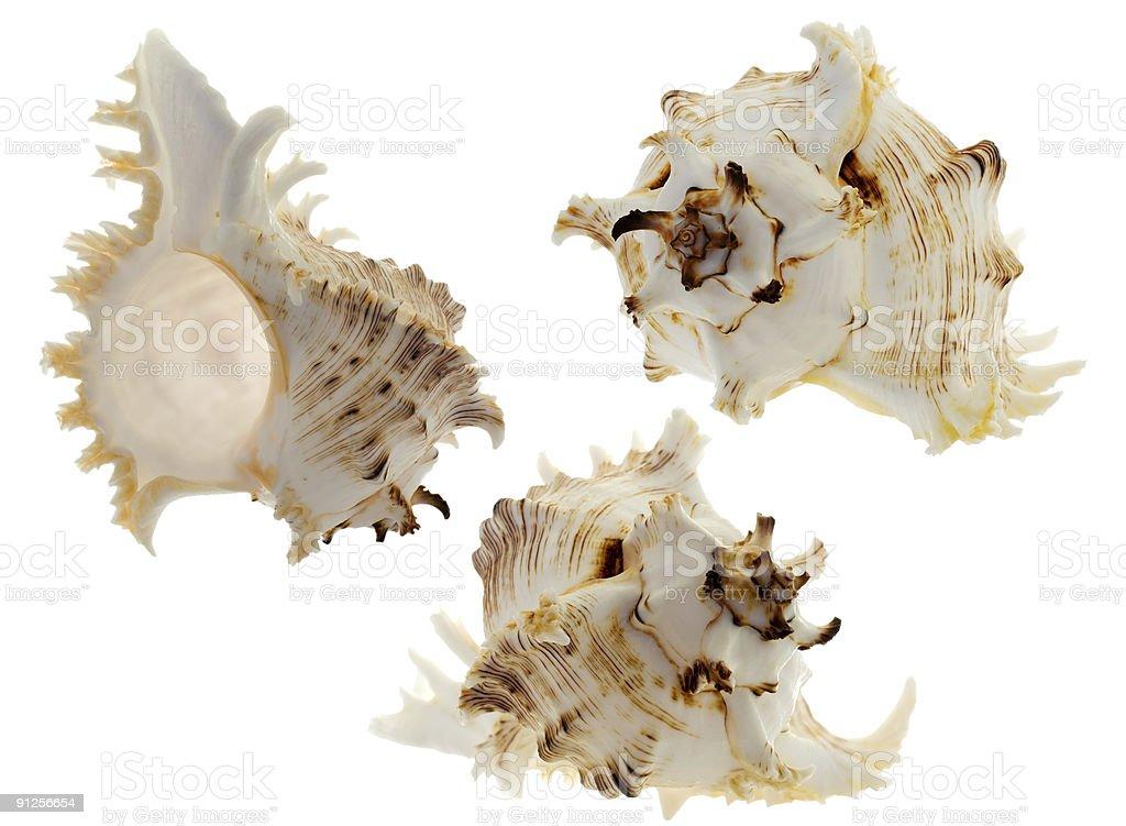 set of spiral shells on white stock photo
