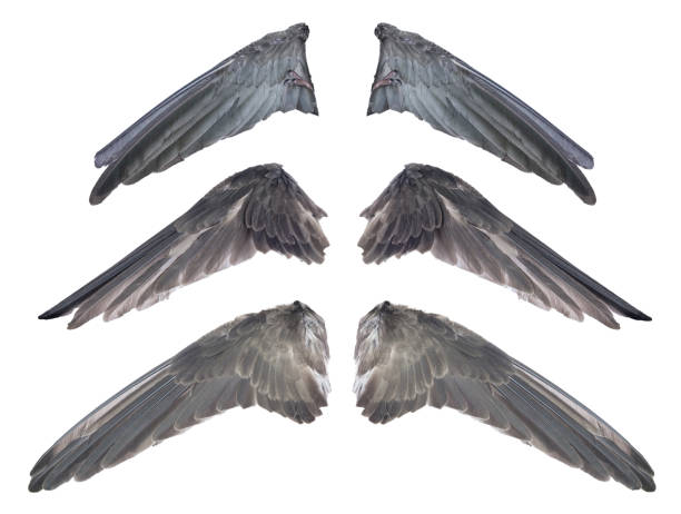 Best evil angel free stock photos pictures royalty free images istock - Free evil angel pictures ...