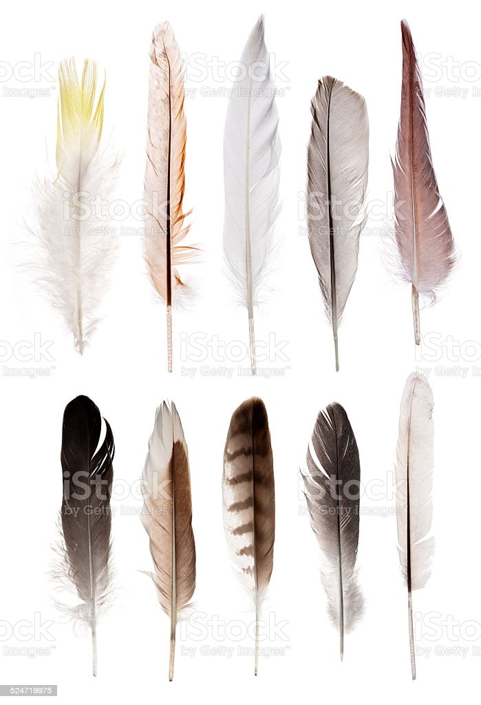 set of ten straight feathers isolated on white stock photo