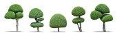 Set of toothbrush trees dwarf ( Tako trees, Streblus asper Lour trees ) isolated on white background : Decoration tree